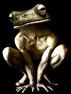 Creatures-hybrides-Francesco-Sambo-7