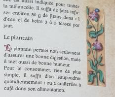 Plantes6